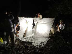 light setup for collection of moths at night