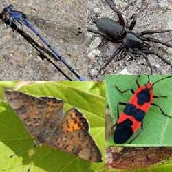 Butterflies and Moths in the Sonoran Desert