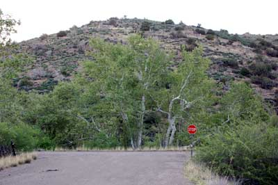 Arizona Sycamores along Sycamore Creek in the foothills of the Mazatzal Mountains, Arizona